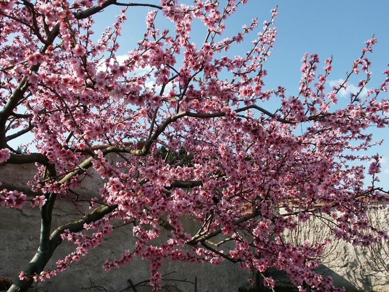 arbres ou plantes qui coutent cheres